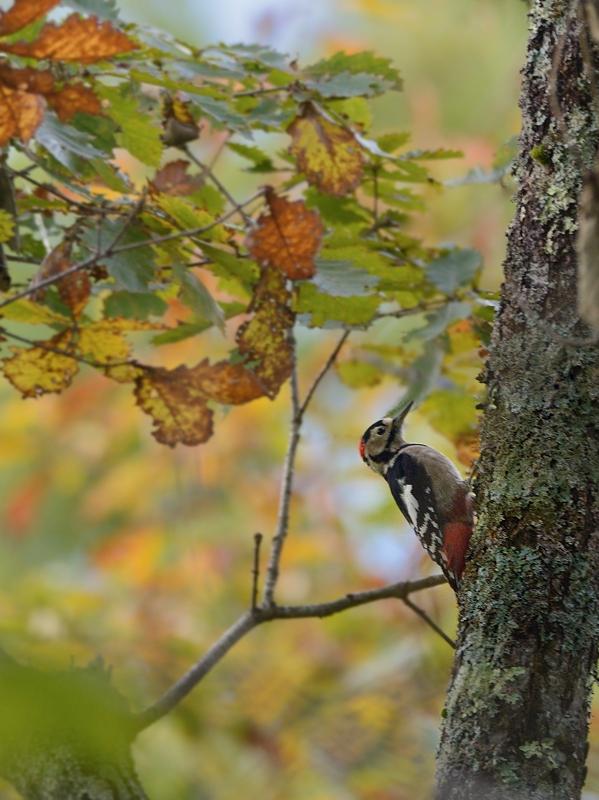 山小屋から鳥見(5)(ケラ類/カラ類)_a0204089_638624.jpg