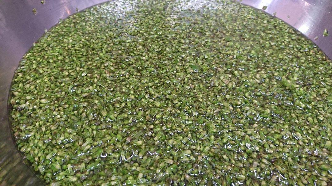「青紫蘇の実の塩漬け」作り「柿ジャム」作りと、栗の渋皮煮の販売開始。_a0125419_06531516.jpg