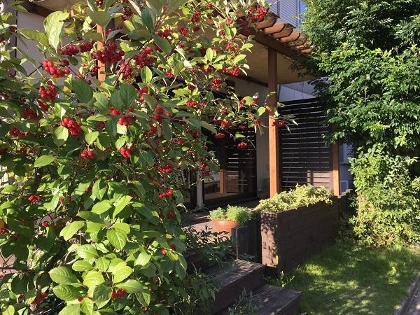 秋ですね_b0100229_15430088.jpg