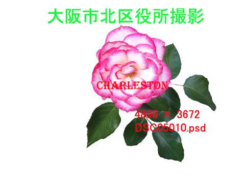 e0376329_20044977.jpg
