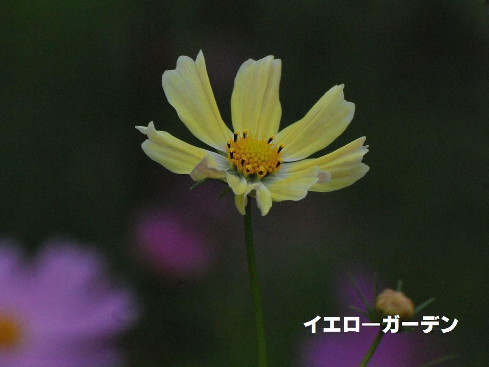 e0340143_14101586.jpg