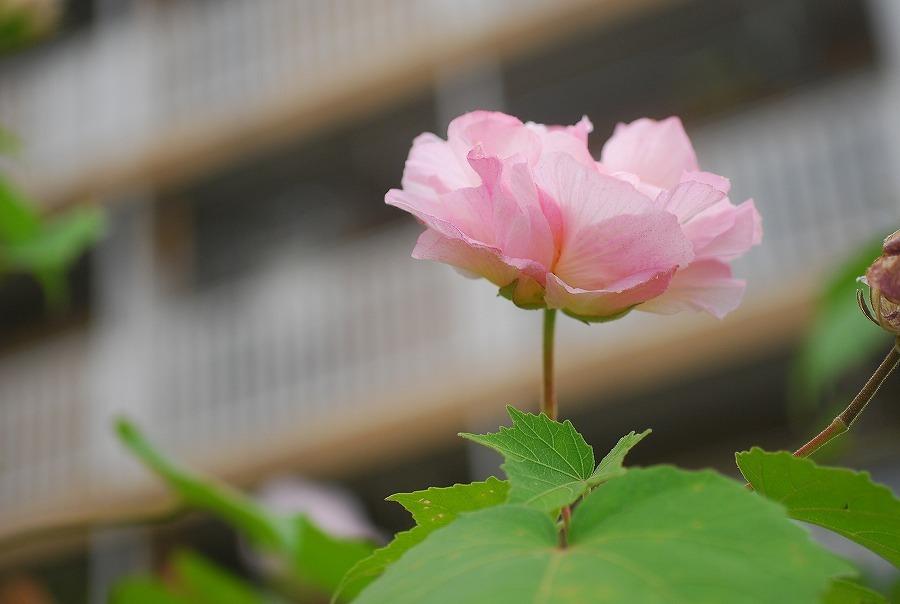 秋の散歩道「杜鵑草ほか」_c0187781_21391066.jpg