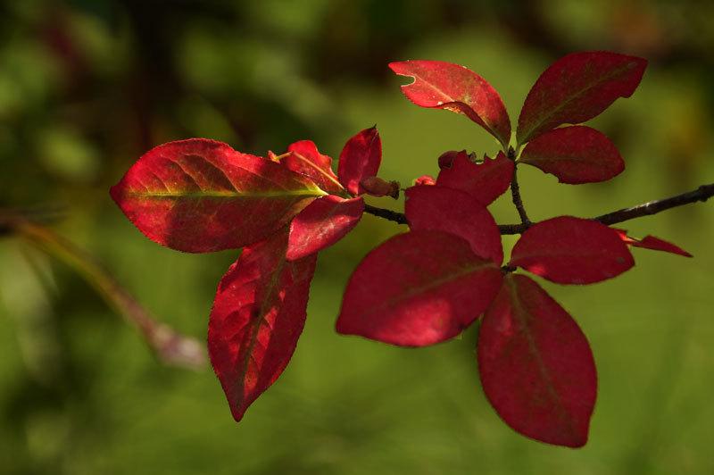 紅葉を探して_d0162994_09425929.jpg