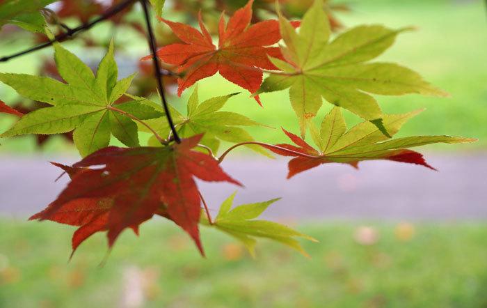 紅葉を探して_d0162994_09433970.jpg