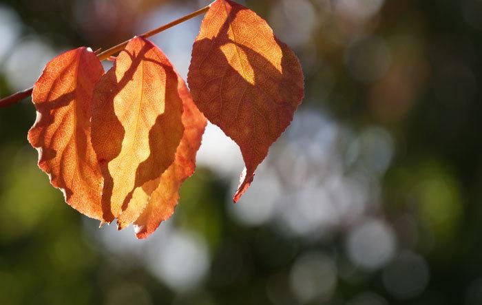 紅葉を探して_d0162994_09435955.jpg