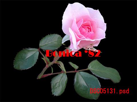 e0376329_23551923.jpg