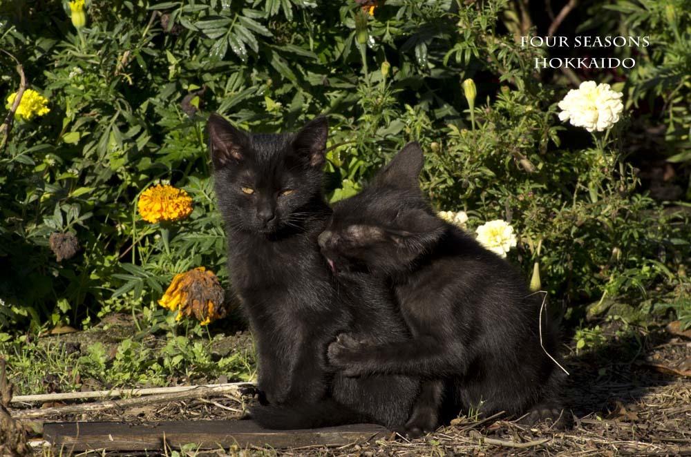 黒猫のきょうだい_f0152939_09524955.jpg