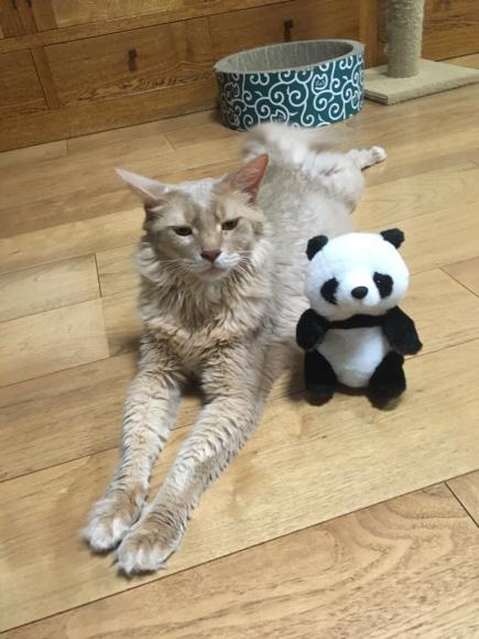 ネコ・空ちゃん(くうちゃん)とパンダ_d0339676_16504349.jpg