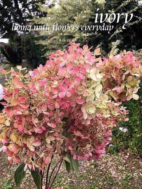 『〜IVORY 花教室 10 October 開催です〜♬』_b0094378_18270571.jpeg