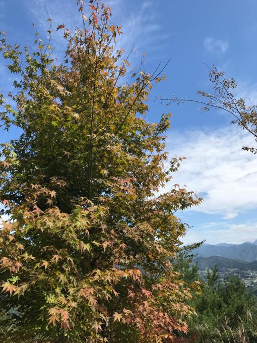 私的ブログ…下見と秋を見つけに…編_d0132688_18075821.jpg