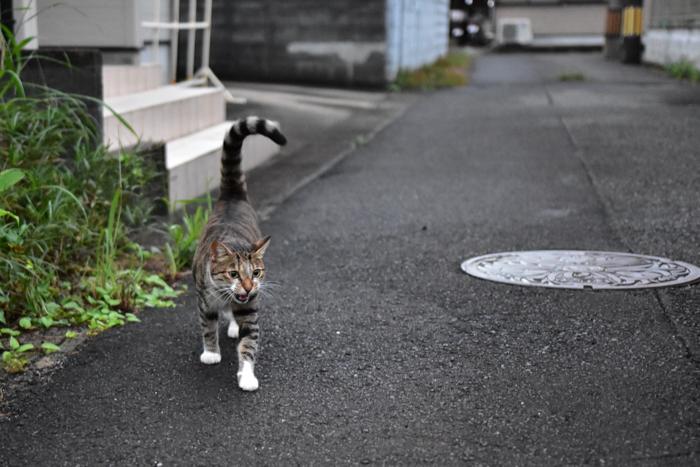 花を愛(め)で、猫と戯(たわむ)れ(^o^)_c0049299_21134776.jpg