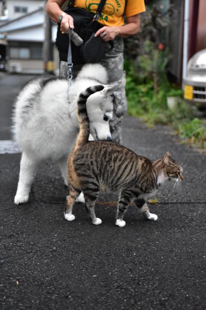 花を愛(め)で、猫と戯(たわむ)れ(^o^)_c0049299_21164387.jpg
