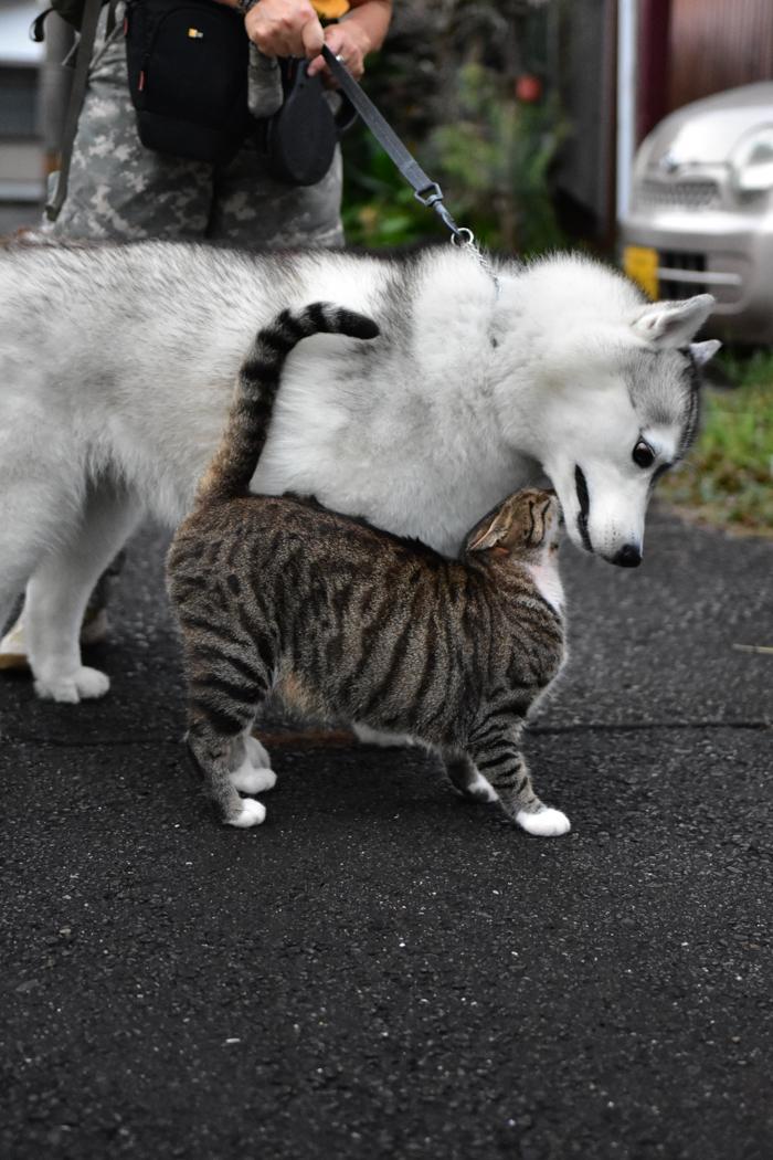 花を愛(め)で、猫と戯(たわむ)れ(^o^)_c0049299_21170485.jpg
