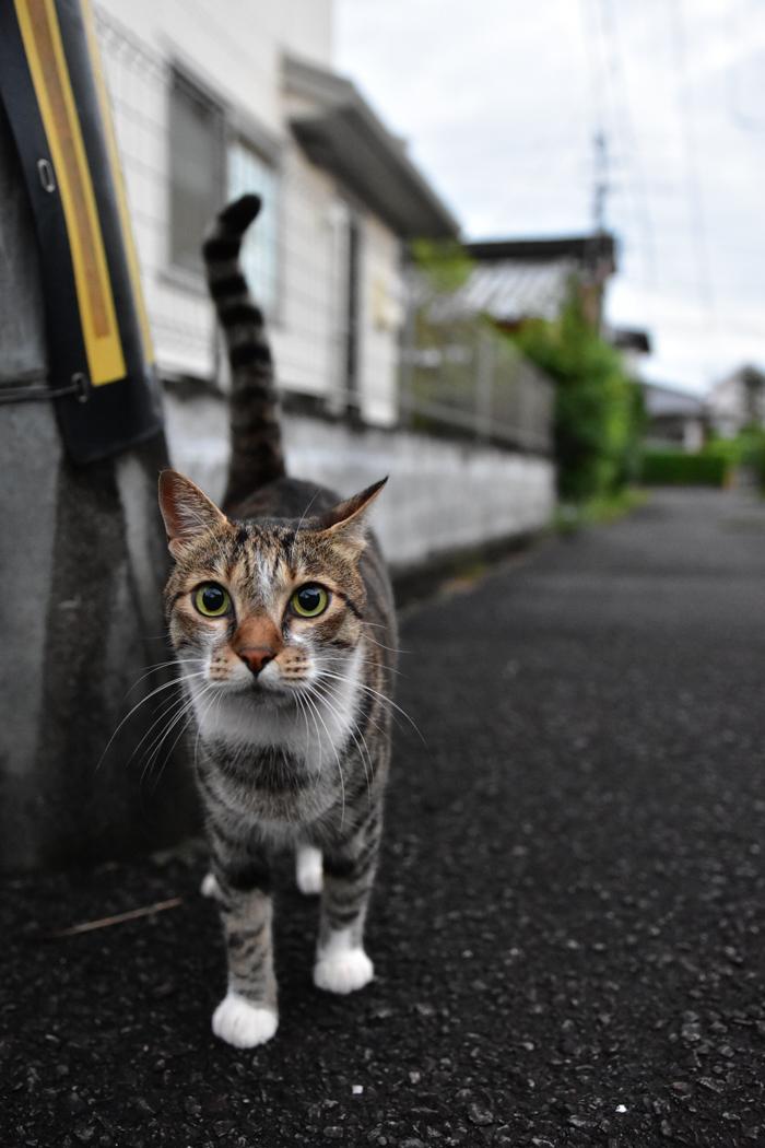 花を愛(め)で、猫と戯(たわむ)れ(^o^)_c0049299_21201739.jpg