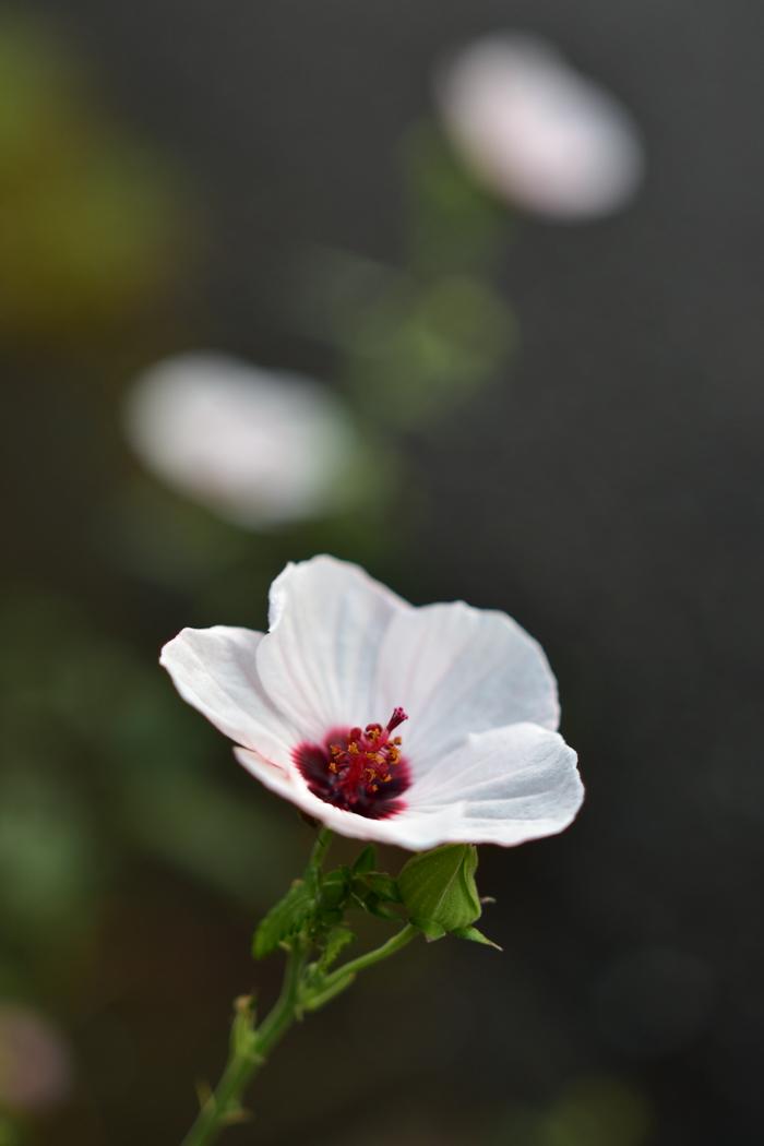 花を愛(め)で、猫と戯(たわむ)れ(^o^)_c0049299_21540702.jpg