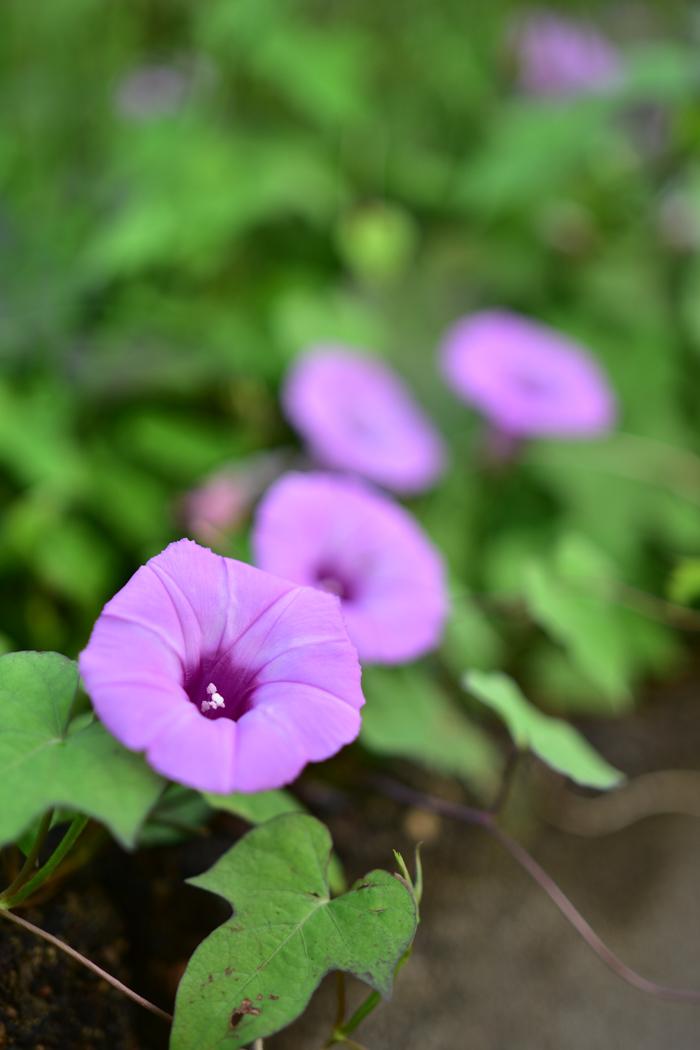 花を愛(め)で、猫と戯(たわむ)れ(^o^)_c0049299_21544184.jpg