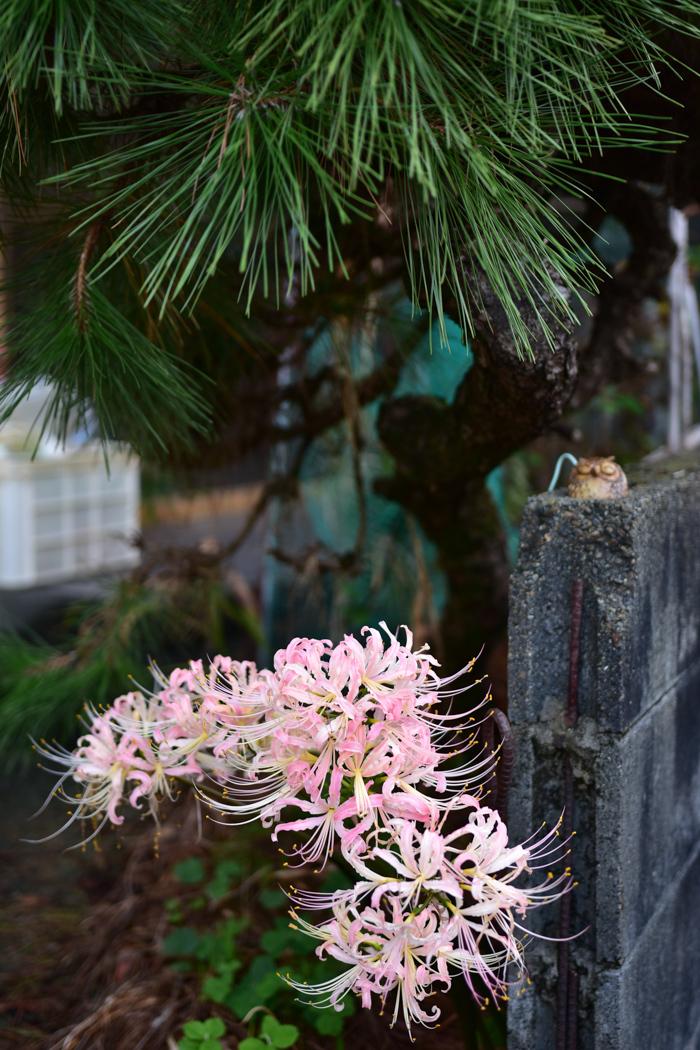 花を愛(め)で、猫と戯(たわむ)れ(^o^)_c0049299_21563604.jpg
