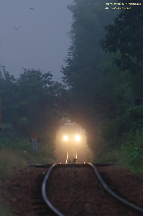 霧の海の朝に_d0309612_22311793.jpg