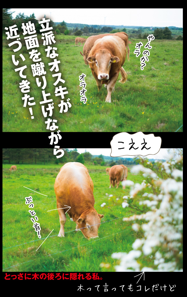 a0358016_16051109.jpg