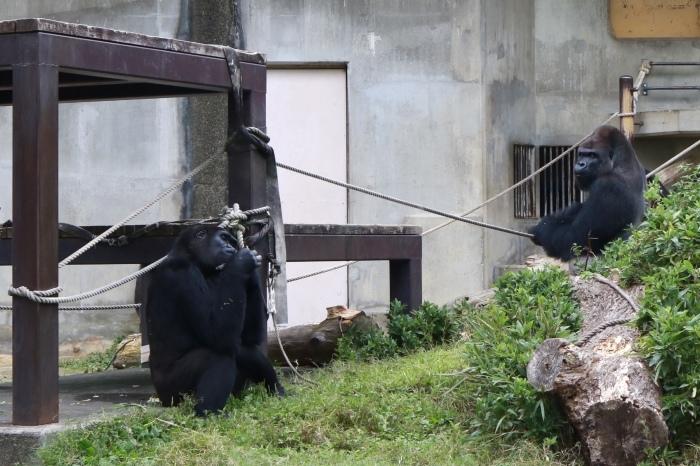 【東山動植物園】名古屋旅行 - 3 -_f0348831_07542313.jpg