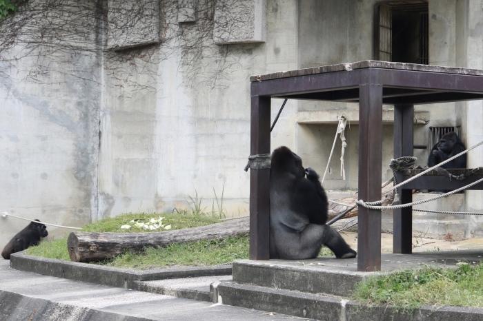 【東山動植物園】名古屋旅行 - 3 -_f0348831_07543131.jpg