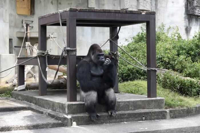 【東山動植物園】名古屋旅行 - 3 -_f0348831_07543355.jpg