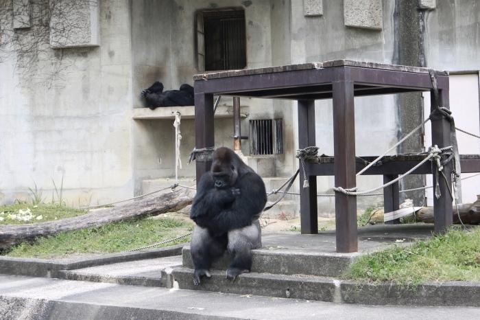 【東山動植物園】名古屋旅行 - 3 -_f0348831_07544986.jpg