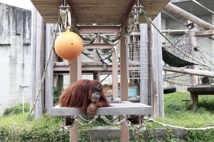 【東山動植物園】名古屋旅行 - 3 -_f0348831_07550466.jpg