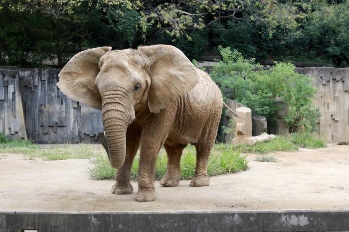 【東山動植物園】名古屋旅行 - 3 -_f0348831_07550506.jpg