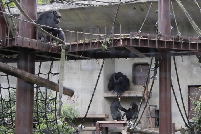 【東山動植物園】名古屋旅行 - 3 -_f0348831_07550745.jpg