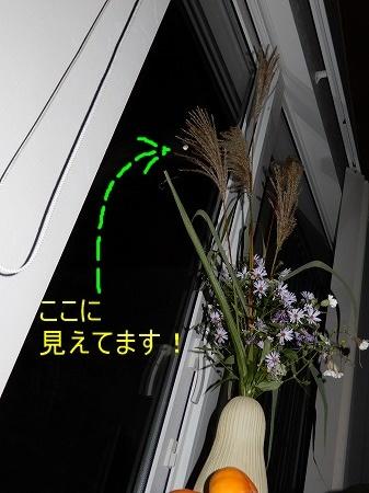d0251572_19194843.jpg