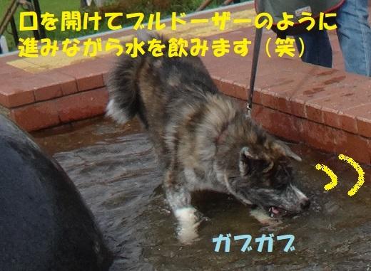 f0121712_06104717.jpg