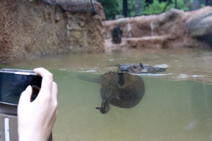 【東山動植物園】名古屋旅行 - 4 -_f0348831_07560342.jpg