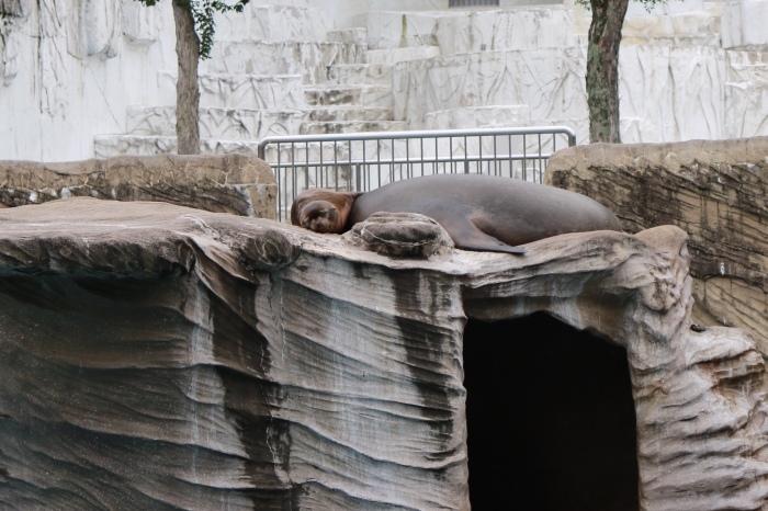 【東山動植物園】名古屋旅行 - 4 -_f0348831_07561058.jpg