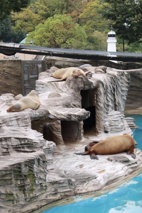 【東山動植物園】名古屋旅行 - 4 -_f0348831_07561222.jpg