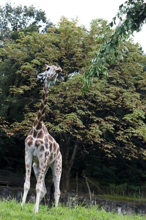 【東山動植物園】名古屋旅行 - 4 -_f0348831_07562009.jpg