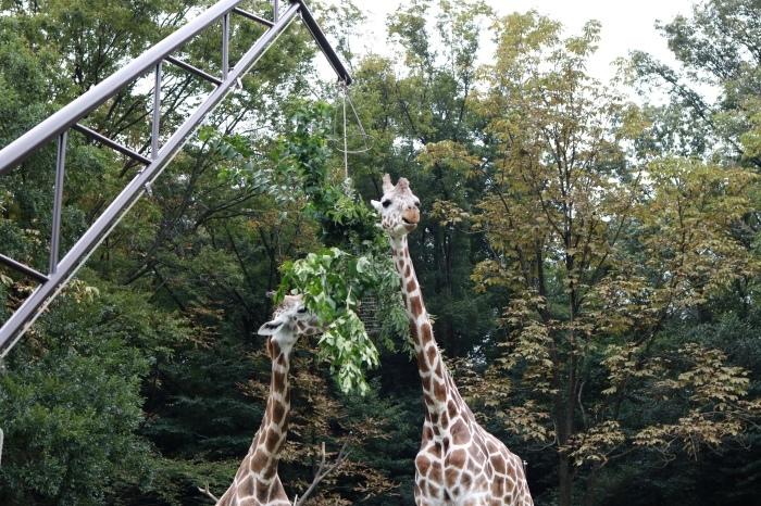 【東山動植物園】名古屋旅行 - 4 -_f0348831_07562254.jpg