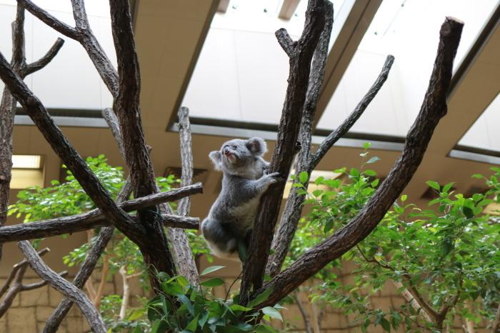 【東山動植物園】名古屋旅行 - 4 -_f0348831_07562672.jpg