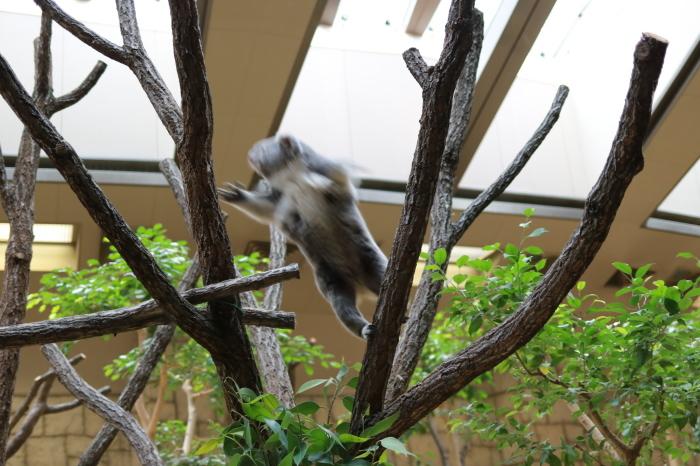 【東山動植物園】名古屋旅行 - 4 -_f0348831_07562866.jpg