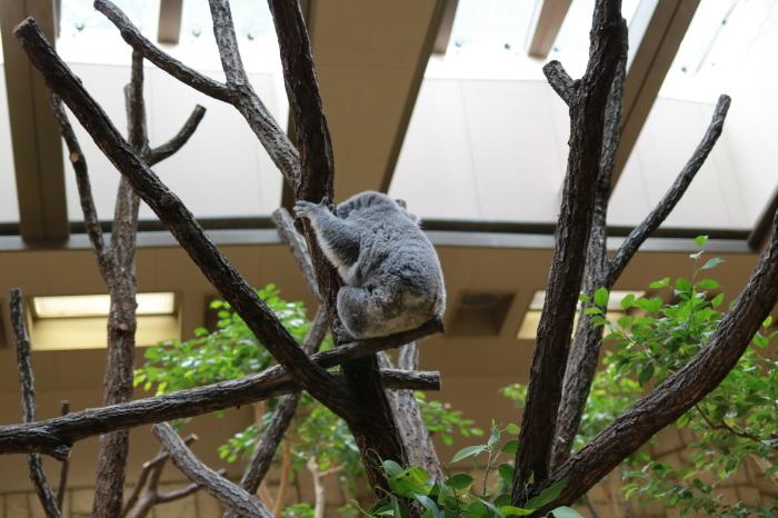 【東山動植物園】名古屋旅行 - 4 -_f0348831_07563244.jpg