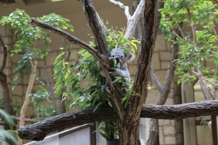 【東山動植物園】名古屋旅行 - 4 -_f0348831_07563557.jpg