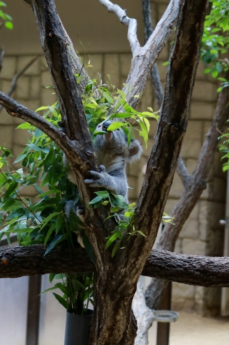 【東山動植物園】名古屋旅行 - 4 -_f0348831_07563671.jpg