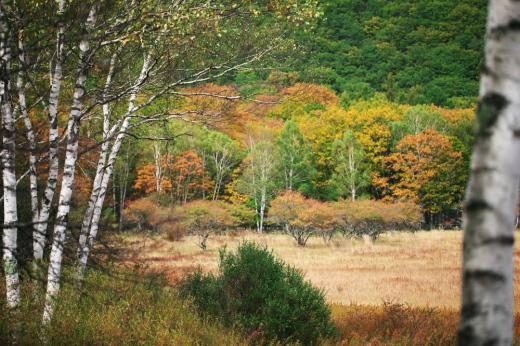 紅葉散歩。_c0179360_10595935.jpg