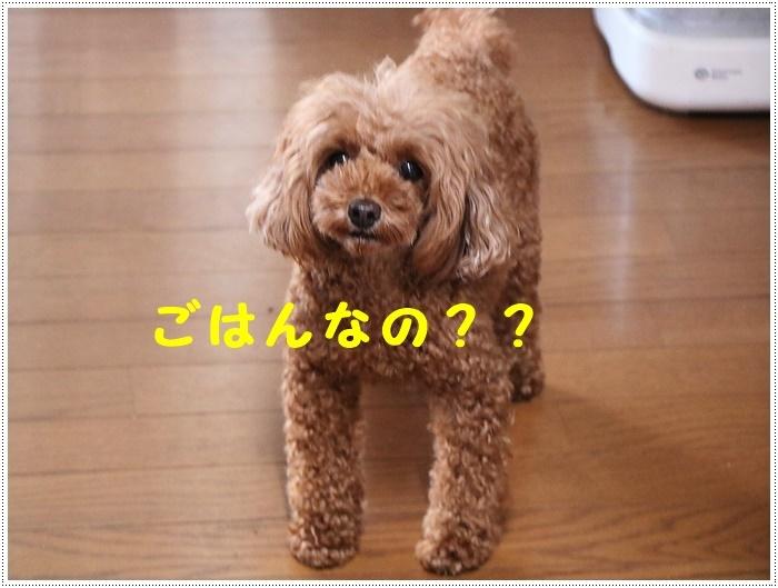 b0175688_21430006.jpg