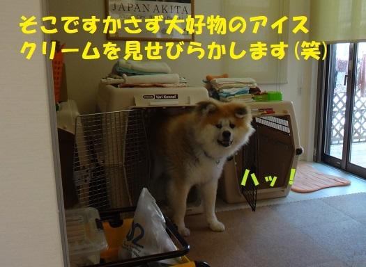 f0121712_14121404.jpg