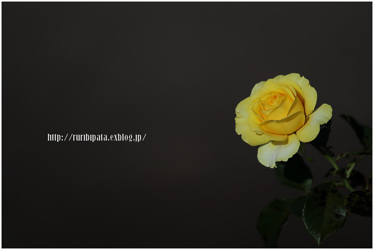 f0302613_17204936.jpg