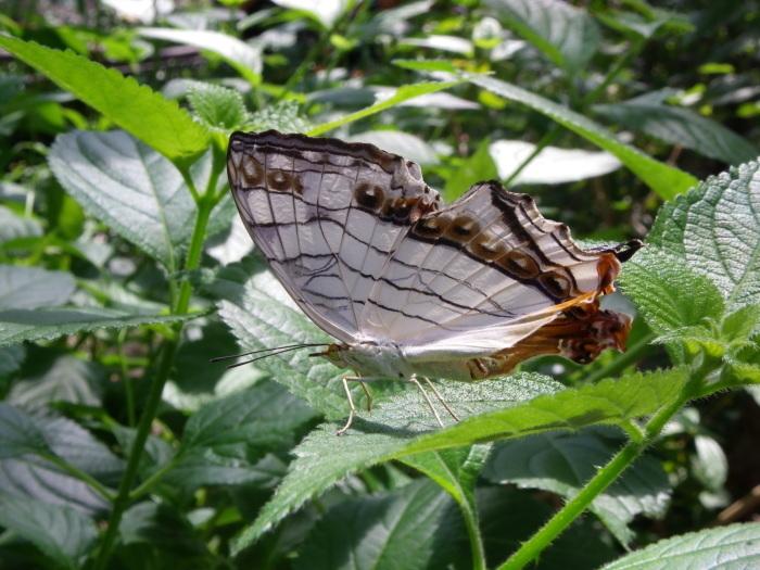 多摩動物園 蝶園 10月8日_d0254540_18143917.jpg