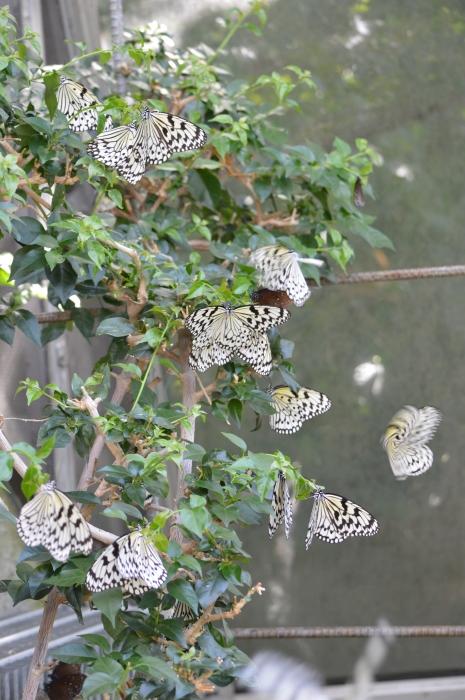 多摩動物園 蝶園 10月8日_d0254540_18165654.jpg