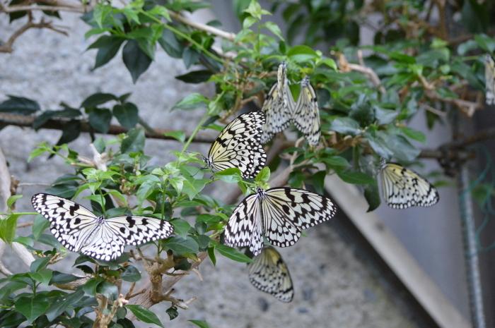 多摩動物園 蝶園 10月8日_d0254540_18172810.jpg