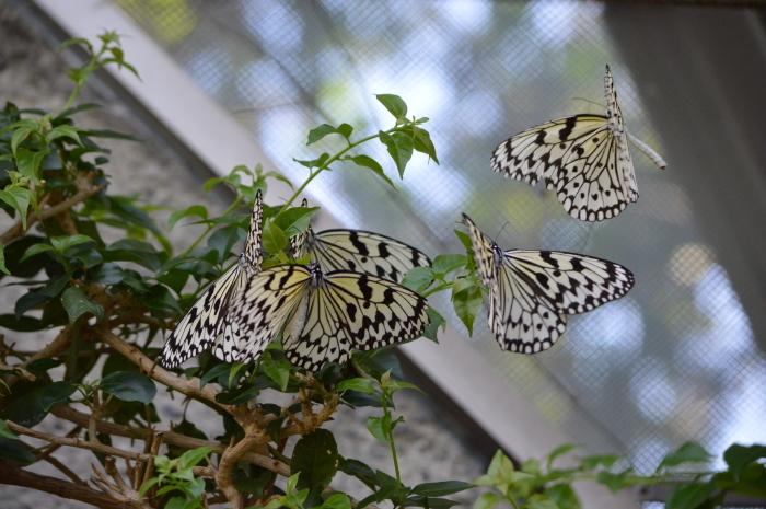 多摩動物園 蝶園 10月8日_d0254540_18175773.jpg